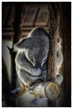 Rest NEEDED ! by Veronique AUBOIS-MANN on 500px