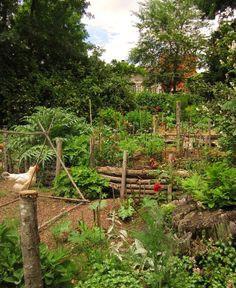 Potager filling up fast by hardworkinghippy (permaculture)