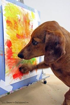 {Ammo the Dachshund Artist} so utterly adorable! Look up Ammo & the Painting Pony! Where do all these artistic animals come from, and why don't my pets like to paint? I Love Dogs, Cute Dogs, Weenie Dogs, Doggies, Dachshund Love, Daschund, Scottish Terrier, Mans Best Friend, Dog Life