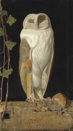 """laclefdescoeurs: """"The White Owl, 1856, William James Webbe """""""