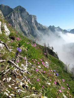 Vette Feltrine, dal Parco Nazionale Dolomiti Bellunesi - Dolomites, province of Belluno, Veneto, Northern Italy