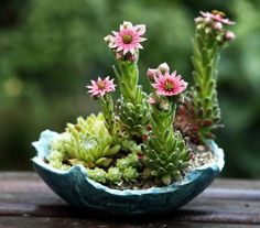 succulents with flowers enhanced by a well-chosen colorful po-8-