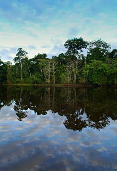 Amazon Jungle, Peru. The Amazon rainforest, also known in English as Amazonia or the Amazon Jungle, is a moist broadleaf forest that covers most of the Amazon Basin of South America. (V)