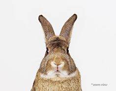 Bunny No. 1 - Sharon Montrose - Animal Photos - Wildlife Photography - Limited Edition Prints - Nursery Decor -Wall Decor -Gift Ideas - Unique Gifts - Modern Art - Affordable Art - Baby Shower Favors - Baby Shower Gifts