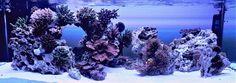 """80-gallon 48"""" x 24"""" x 16"""" reef aquarium"""