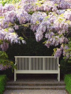 A well-placed garden seat becomes a focal point beneath this wistaria.