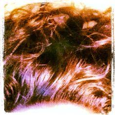 #photoadayApril Hair