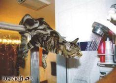 Duschende Katze