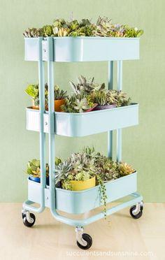 IKEA cart succulent garden   15 Indoor Garden Ideas for Wannabe Gardeners in Small Spaces