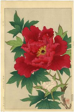 Shodo Kawarazaki Japanese Woodblock Print Red Peony 1954 First Edition RARE | eBay