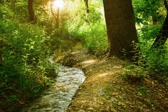#daylight #environment #fall #hike #landscape #lush #outdoors #river #shrub #stream #sun glare #trail #trees #vegetation #water #woods