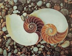 22 best images about Sacred Geometry in Nature on Pinterest ...