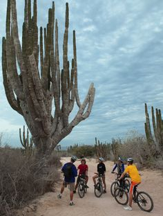 Ride through an impressive landscape for an up-close introduction to the spectacular flora and fauna that flourish in this seemingly harsh environment. Los Cabos, B.C.S., México - #Cabo #LosCabos #adventure  #extreme #Travel   http://visitloscabos.travel/