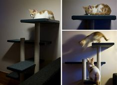 Daveis an architect and a photographer and, boy, does it show in these gorgeous photos of the cat tower that he and his girlfriend Alison made for their two kittens Milo and Lyra (there are only two, although the photo above shows one Milo and six Lyras!) The best part is that this beautiful and…