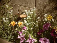 Arizona spring flowers