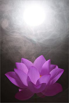 Lotus flower! I want to get a tattoo of one pretty badly.