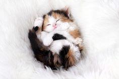 fluffball kitty!