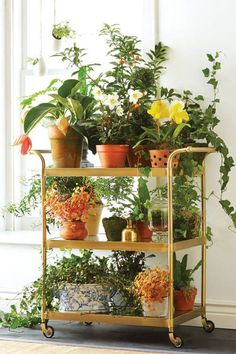 Use a bar cart as a plant stand.