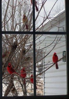 Red birds outside your window (some say Cardinals are relatives coming back to see us.) Hi mama! Pretty Birds, Love Birds, Beautiful Birds, Birds Pics, Beautiful Scenery, Beautiful Things, State Birds, Cardinal Birds, Window View