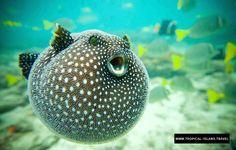 Ballon Fish