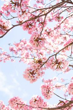 Damit du den perfekten Start in den Frühling hast, gebe ich dir am Lifestyle Blog einige Tipps, die du noch vor Frühlingsbeginn machen solltest. So steht dem Frühlingsanfang nichts mehr im Wege! www.whoismocca.com Life Hacks, Tricks, German, Wallpapers, Lifestyle, Female, Interior, Pretty, Blog