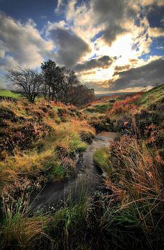 Danby Moor, North York by Cass
