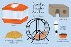 Hamsters need a variety of supplies. Minimize your pet hamster's stress by getting everything you need ready before bringing your pet home. Check out more hamster care tips on our website! Diy Hamster Toys, Hamster Life, Baby Hamster, Hamster House, Hamster Stuff, Hamster Ideas, Hamster Habitat, Hamster Cages, Hamsters As Pets