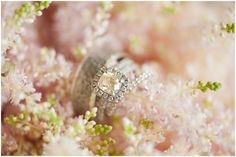 Liz + Mike wedding | Ritz Carlton Sarasota, Florida wedding photographer » Alex Michele Photography