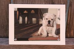 Bulldog Puppy Blank Note Card Animal Photography by HBBeanstalk, $3.00