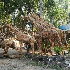 Life size driftwood Giraffes, not something that you would see every day. Exporting now Bali Furniture, Wicker Furniture, Outdoor Furniture, Bali Decor, Balinese Decor, Hotel Motel, French Provincial, Furniture Manufacturers, Driftwood