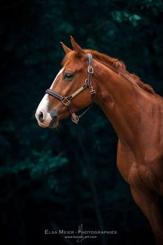 (91) Elsa Meier Photographies - Horses'Art - Photos
