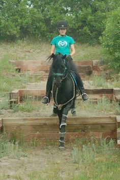 Horse Training and Obstacles