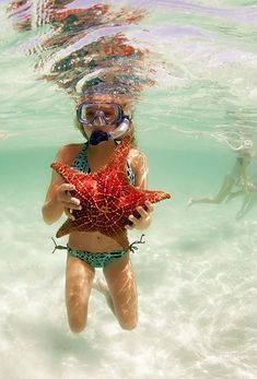 Giant Starfish/ Go Snorkeling somewhere tropical