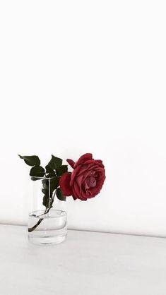 A lonely rose Flower Phone Wallpaper, Tumblr Wallpaper, Flower Wallpaper, Wallpaper Backgrounds, Iphone Wallpaper, Flowers Nature, Beautiful Flowers, Tatoo Rose, Islamic Wallpaper Hd