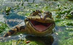 Say cheese! Laughing animals sure to bring a smile to your face  An international comedic photo competition is the perfect antidote for a workday.  http://www.fromthegrapevine.com/nature/wildlife-photography-awards-laughing-animals