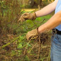 Check off these chores and get your lawn and gardens ready for winter! Fall Planting, Planting Flowers, Autumn Flowering Plants, Autumn Garden, Outdoor Projects, Lawn And Garden, Country Life, Vegetable Garden, Container Gardening