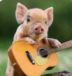 Guitar piggy