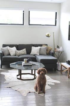 Creating a Chic + Functional Dog Friendly Living Room