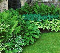 Garden Planning ferns and hostas - We've paired our popular Emerald Isle Hostas with the native Lady Fern, Athyrium filix-femina. They make a stunning starter garden for shade and will be drought tolerant once established. Shade Garden Plants, Garden Shrubs, Landscaping Blocks, Backyard Landscaping, Landscaping Ideas, Inexpensive Landscaping, Luxury Landscaping, Backyard Ideas, Landscaping Melbourne