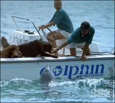 Dolphin trained to Kiss Doggie. Love it!