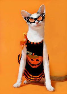 Happy Halloween from The Cat's Meow Crazy Cat Lady, Crazy Cats, Silly Cats, I Love Cats, Cool Cats, Neko, Halloween Cat, Happy Halloween, Halloween Ideas