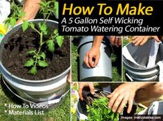 How To Build A 5 Gallon Self Wicking Tomato Watering Container