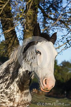 Beautiful Spotted Horse - Download From Over 47 Million High Quality Stock…
