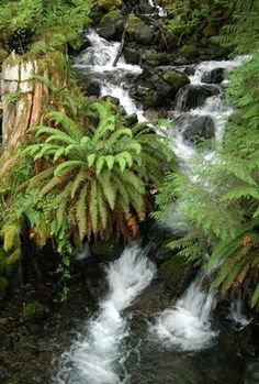 Mount Rose — Washington Trails Association