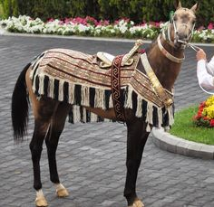 Akhal Teke Horses, Breyer Horses, Horse Tack, Horses And Dogs, Wild Horses, All The Pretty Horses, Beautiful Horses, Horse Armor, Horse Costumes