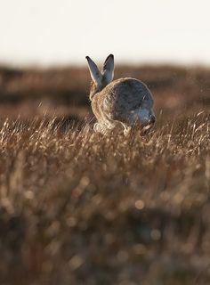 #conejo #rabbit #brown
