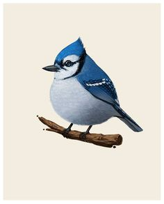 Mike Mitchell - Bluejay http://www.sirmitchell.com/