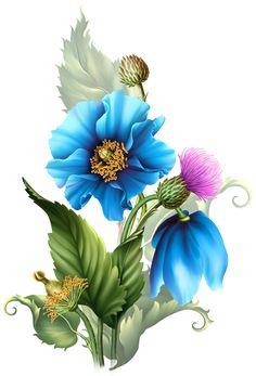 Himalyan BLUE POPPIES from babs-babs. Обсуждение на LiveInternet - Российский Сервис Онлайн-Дневников