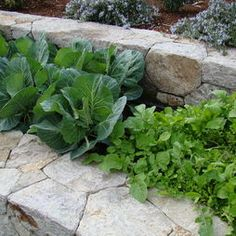 Edible Gardens Design, Pictures, Remodel, Decor and Ideas