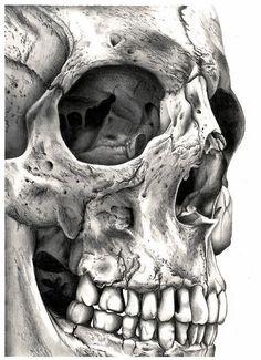 Incredibly detailed skull drawing